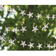 Set of 50 Solar-Powered Star Lights